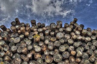 Fit for 55: Spaľovanie dreva na výrobu elektriny dostane stopku. Ťažiť sa však bude viac